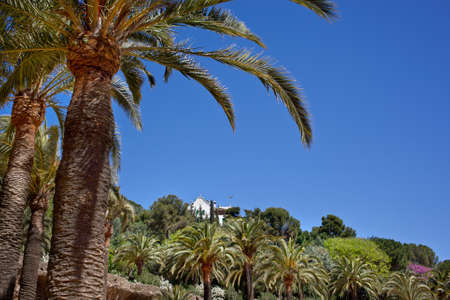 Green palm tree in Park Guell, Barcelona, Spain photo