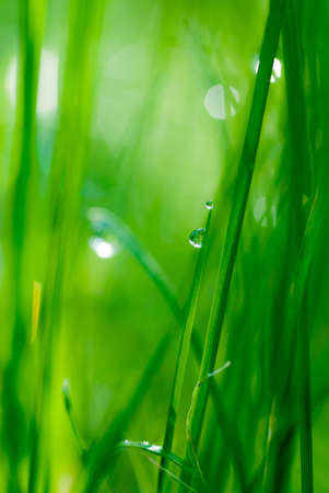 rain forest background: drop on grass and green background with natural bokeh, soft focus