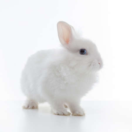 White rabbit isolated on white background Banque d'images