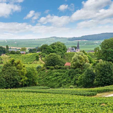 france: Vineyard landscape, Montagne de Reims, France