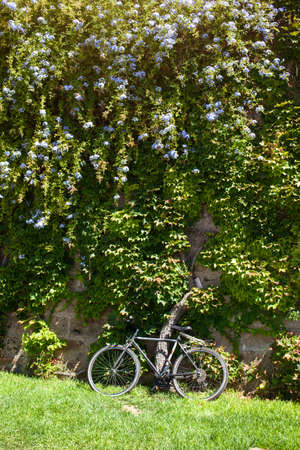 Old bicycle near green natural wall with flowers photo