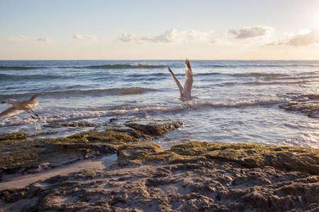coastline: Seagulls on coastline of Mallorca