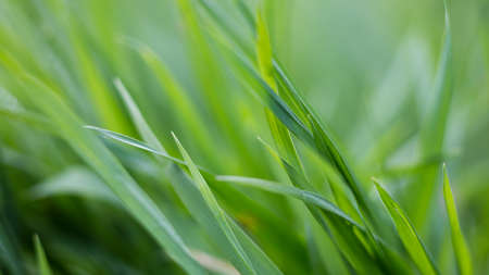 postproduction: green grass background, natural image without any postproduction, soft focus Stock Photo