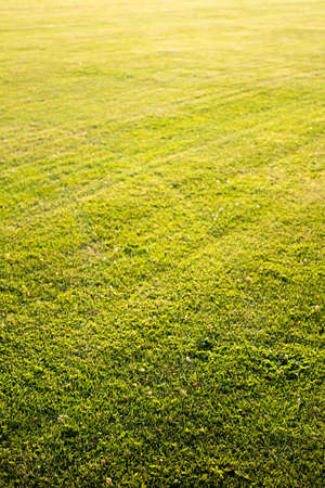 postproduction: green cutted grass background on golf field, natural image without any postproduction