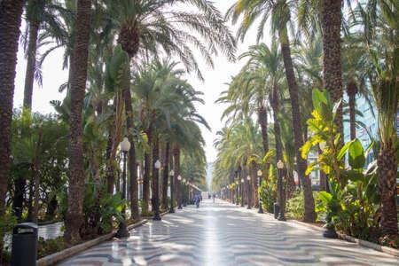 palmtrees: Palm alley at Alicante . Mediterranean Boardwalk in Alicante, Spain