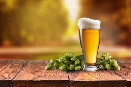 hopfield: Beer glass served on wooden desk . Hop-field on background Stock Photo