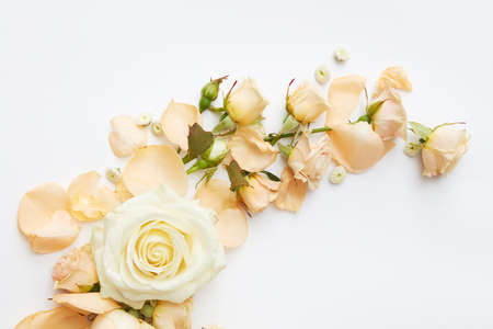 Beautiful roses of tender colors represented over white background. Nice decoration may be used for wedding car or post card in Valentine's Day. 스톡 콘텐츠