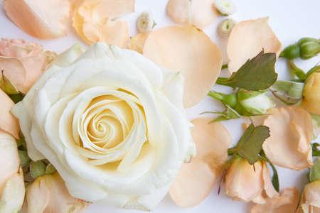Rosa bianca di sfondo Archivio Fotografico - 71752232