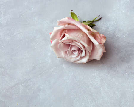 s day: Pink rose buds