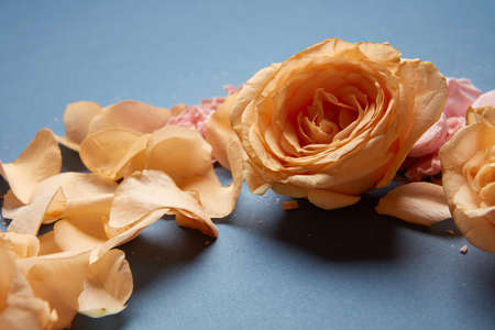 Beautiful bouquet of roses on a blue background