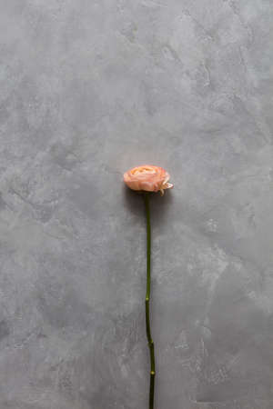 represented: One rose represented on background
