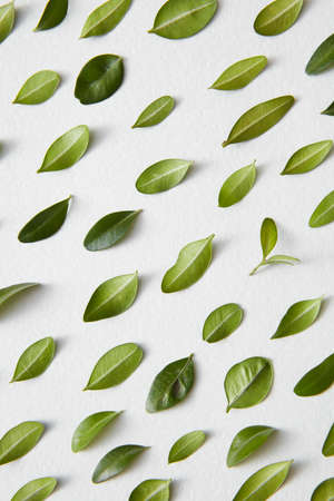 Green leaves and white background Stock Photo