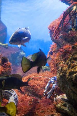 blue fish: Underwater scene, showing different cfishes swimming Stock Photo