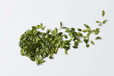 Green leaves and white background Archivio Fotografico