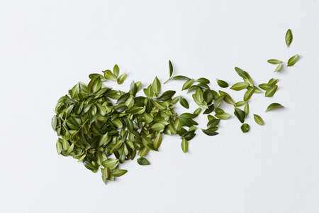 Groene bladeren en witte achtergrond