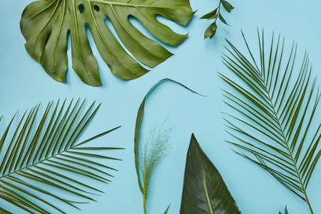 Foglie verdi isolate