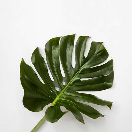 Closeup of green leaf isolated over background. Flat lay
