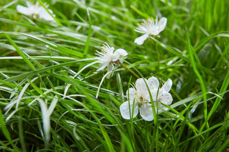 Background with green grass and flowers