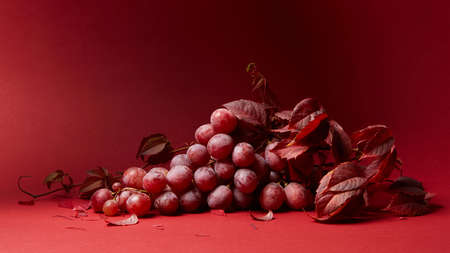 tendrils: grape leaves and a bunch of ripe red grapes on a red background Stock Photo