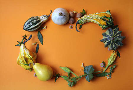 frame from decorative pumpkins, pears, nuts, green leaves and flowers on an orange background, Autumn concept flat lay