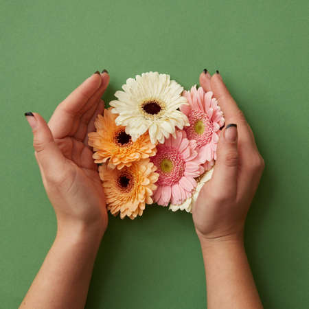 Female hands hold different gerbera flowers on a green paper background Stock Photo