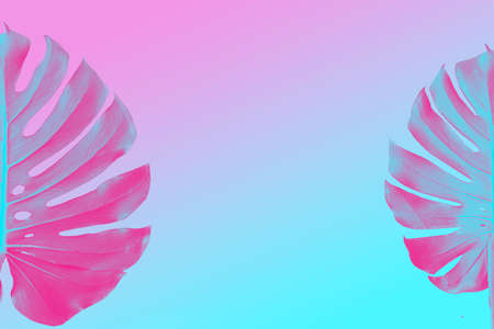 Monstera two leaves as border isolated on ultra violet, pink and blue duotone background