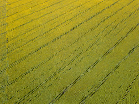 Aerial view from the drone to fields with crops in the spring at sunset