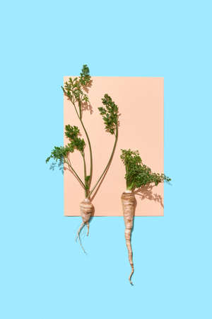 Parsley roots with green stems decorate a piece of paper on a blue background with copy space for text. Creative layout for your ideas. Archivio Fotografico