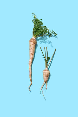 Healthy raw parsley root with green leaves on a blue background with copy space. Spicy ingredient for sauce. Flat lay