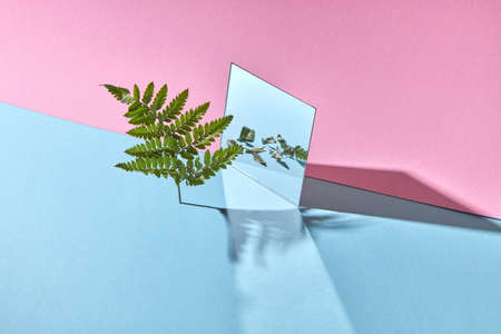 The composition of the mirror with the reflection of the leaves and branches of a fern on a blue-pink background with copy space.