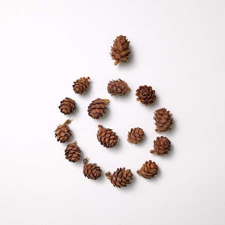 Pine cones in the shape of a cones presented on a gray background with copy space for text. Natural composition 免版税图像