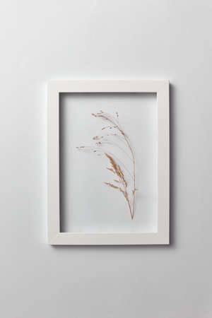 Decorative composition of seedhead plant in a rectangular frame on a light background. Banque d'images - 121663387