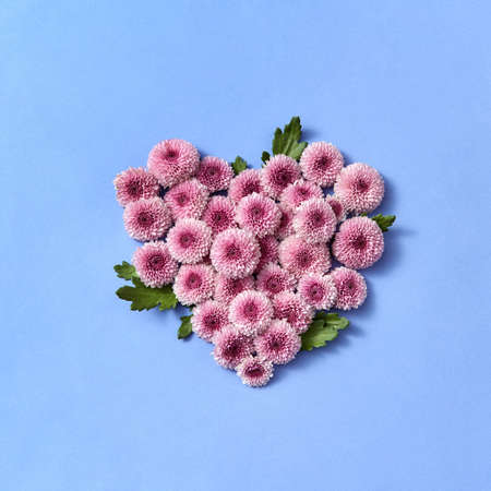 Flowering heart from chrysanthemum on a pastel background.