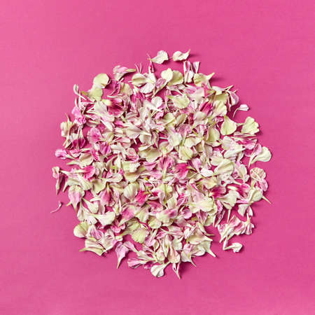 Round pattern of flowers petals on a magenta background. 스톡 콘텐츠