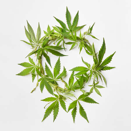 Branch of fresh natural green marijuana leaves in the shape of round wreath on a light grey background with copy space. Concept use of cannabis for medical puposes.