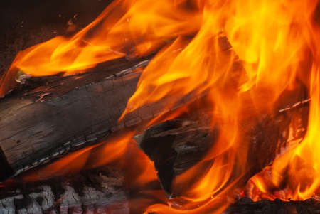 Open fire burning woods background with copy space. Close up view. Can be used for your creativity.