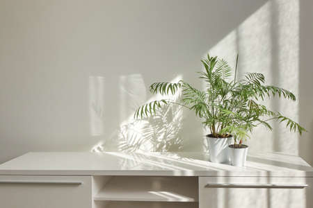 Stylish interior desk with green houseplants and shadows on the wall. Banque d'images
