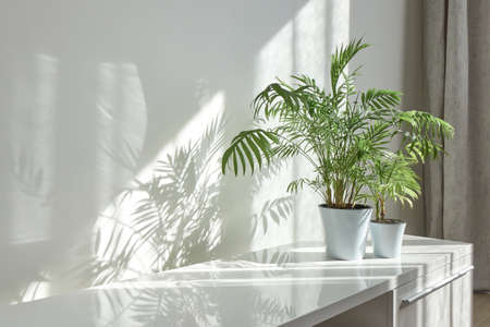 Eco interior corner with glossy surface of stand and green houseplants.