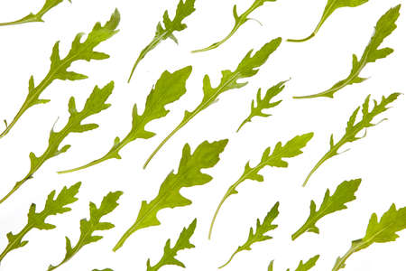 Green vegetable natural arugula pattern on a white background.