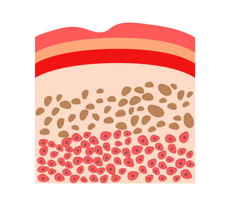 Human skin structure icon vector for medical banner, web, app, educationa