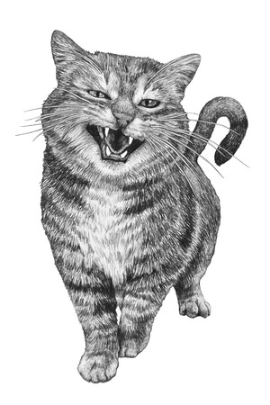 Portrait of a cute funny cat isolated on white background. Pencil drawing illustration.