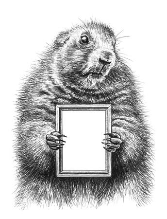 marmot: Pencil drawing of a marmot