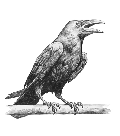 Pencil drawing of raven isolated on white background Stock Photo