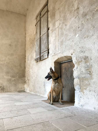 doggy position: Very nice portrait from a malinois in front of a small door.