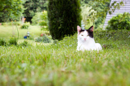 moggy: A cute cat lying in the grass.