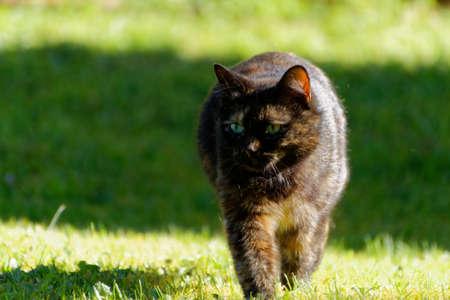 A pretty cat outdoor.