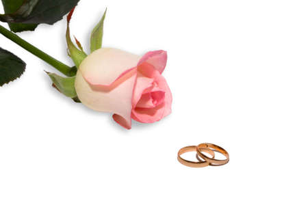 Rose and wedding rings on white background. Isolated.