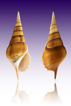 Sea Shell on color background Stock Photo
