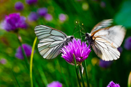 Beautiful butterfly on summer lilac flowers on green abstract background. photo