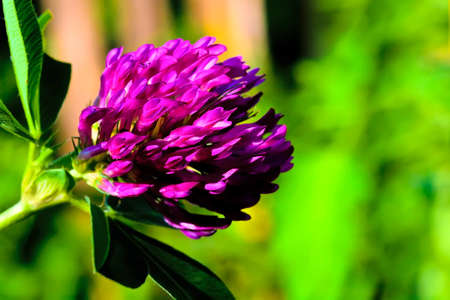 summer lilac  flower on green abstract background photo